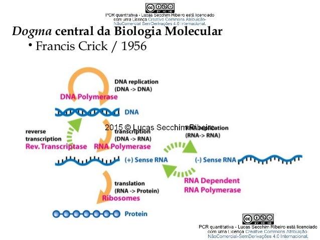Dogma central da Biologia Molecular • Francis Crick / 1956