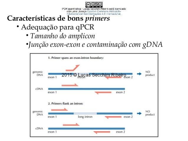 Ensaio para 5´-nuclase – Sondas TaqMan • Atividade 5´-nucleásica da Taq DNA Polimerase • Altamente específica, sem produto...