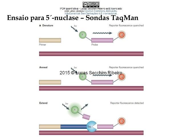 Conceitos importantes • Eficiência Qtde. inicial de DNA 1 10 100 1000 10000 100000 1000000 10000000 100000000 CT 40 35 30 ...