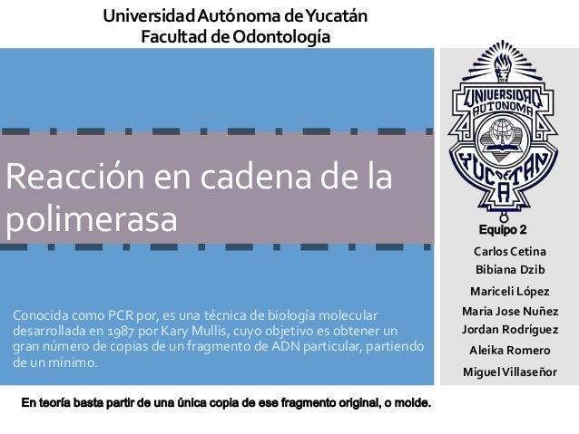 Universidad Autónoma deYucatán Facultad de Odontología  Reacción en cadena de la polimerasa  Equipo 2  Carlos Cetina Bibia...