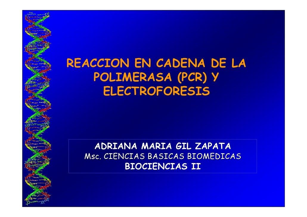 REACCION EN CADENA DE LA     POLIMERASA (PCR) Y      ELECTROFORESIS        ADRIANA MARIA GIL ZAPATA   Msc. CIENCIAS BASICA...