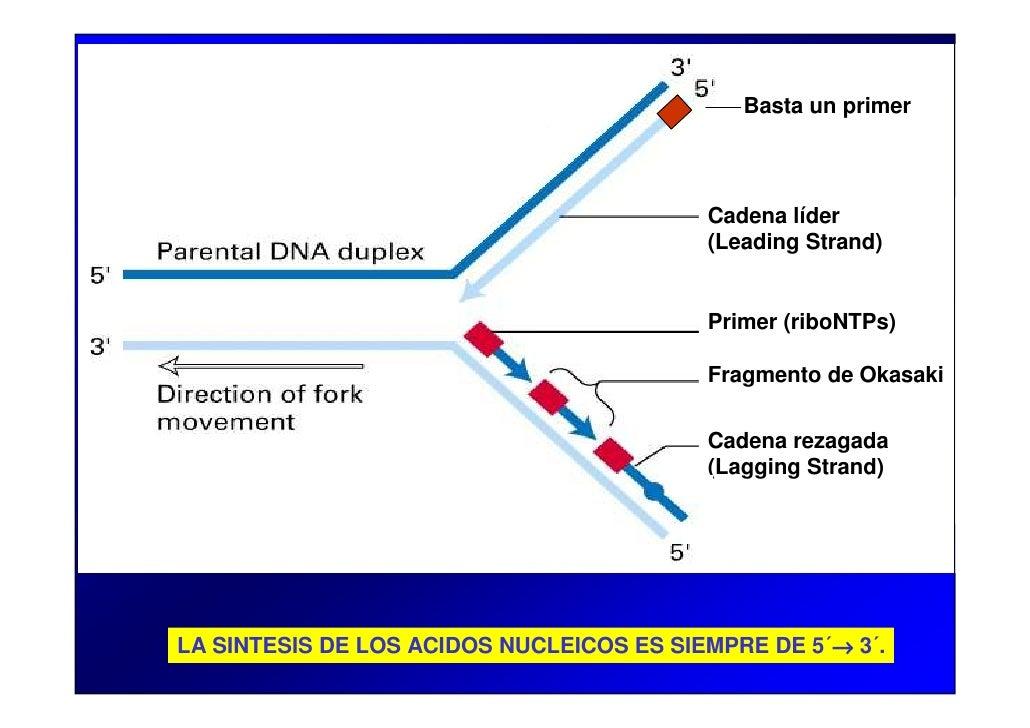 Pcr Y Electroforesis Biociencias 2010 Pdf Slide 3