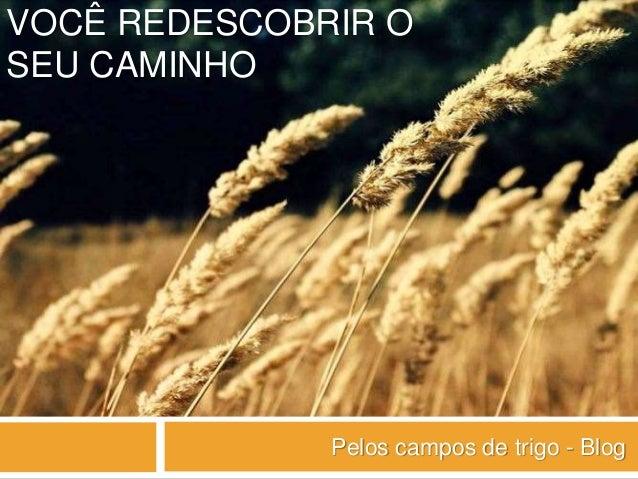 VOCÊ REDESCOBRIR O SEU CAMINHO Pelos campos de trigo - Blog