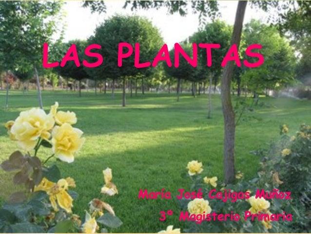 LAS PLANTAS María José Cajigas Muñoz 3º Magisterio Primaria