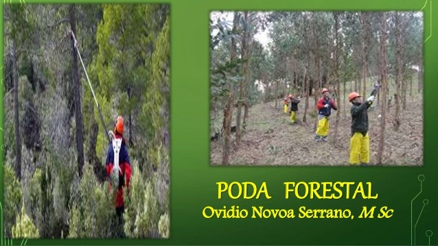 PODA FORESTAL Ovidio Novoa Serrano, M Sc