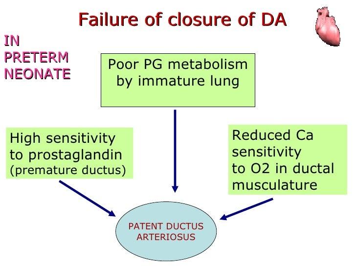 Pda Part 3 Anatomy Physiology