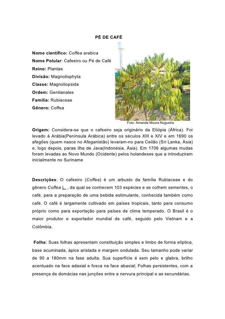 PÉ DE CAFÉNome científico: Coffea arabicaNome Polular: Cafeeiro ou Pé de CaféReino: PlantaeDivisão: MagnoliophytaClasse: M...