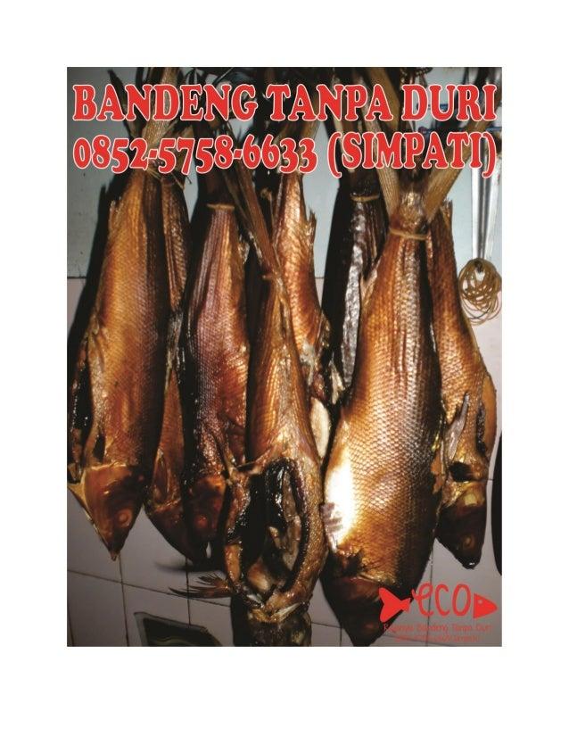 0852-5758-6565(SIMPATI), Bandeng Asap Sidoarjo, Bandeng Tanpa Duri, Bandeng Cabut Duri