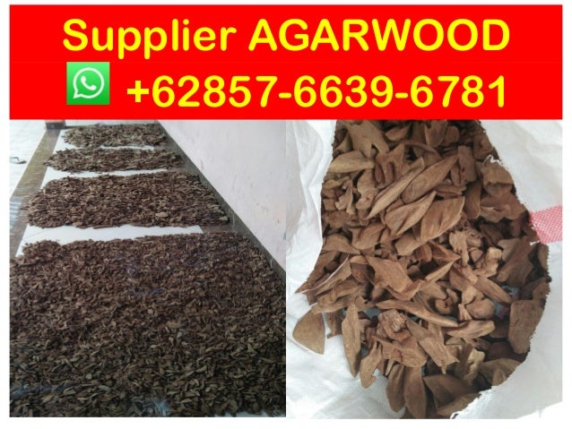 62 857-6639-6781 ( WhatsApp) , Oud wood chips indonesia Suppliers