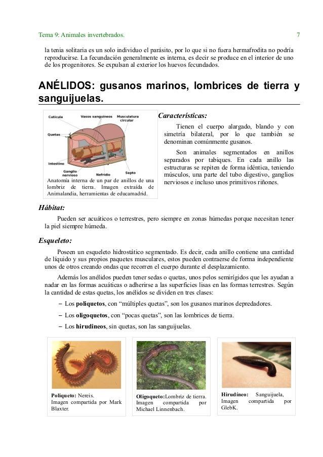 Moderno Anatomía Interna De Un Diagrama De Lombriz De Tierra ...
