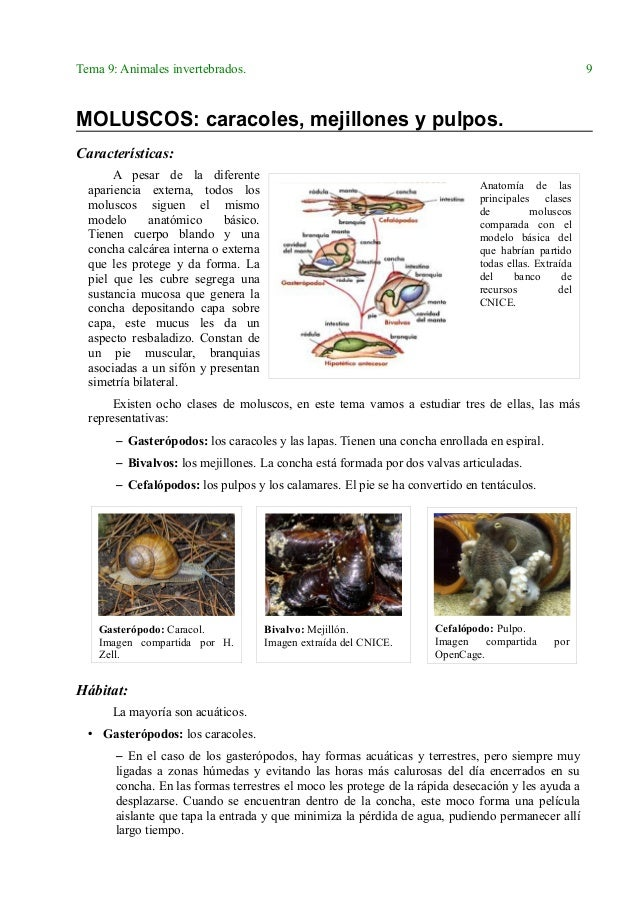 Lujoso Anatomía Azul Mejillón Patrón - Imágenes de Anatomía Humana ...