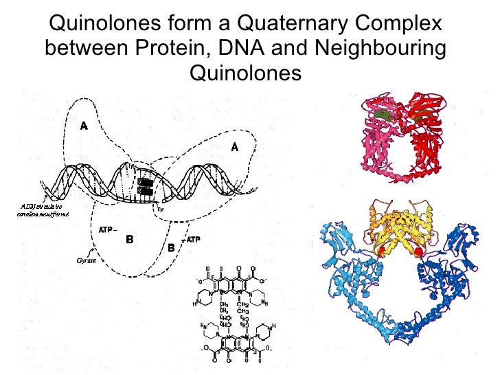 Chloroquine and fluoroquinolone resistance dissertation
