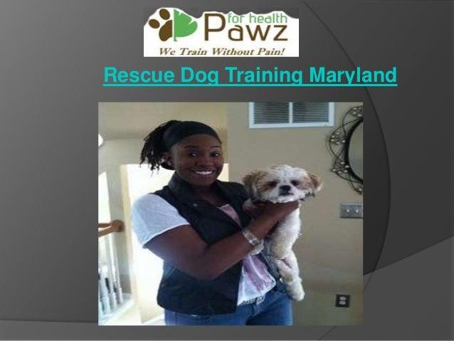 Rescue Dog Training Maryland