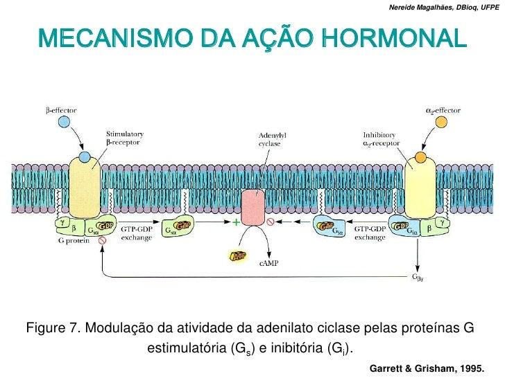 Nereide Magalhães, DBioq, UFPE      MECANISMO DA AÇÃO HORMONAL     Figure 7. Modulação da atividade da adenilato ciclase p...