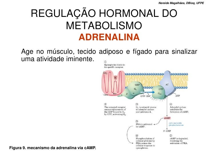 Nereide Magalhães, DBioq, UFPE              REGULAÇÃO HORMONAL DO                METABOLISMO                              ...