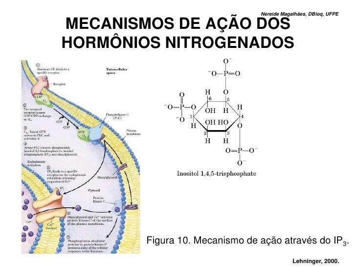 Nereide Magalhães, DBioq, UFPE  MECANISMOS DE AÇÃO DOS HORMÔNIOS NITROGENADOS             Figura 10. Mecanismo de ação atr...