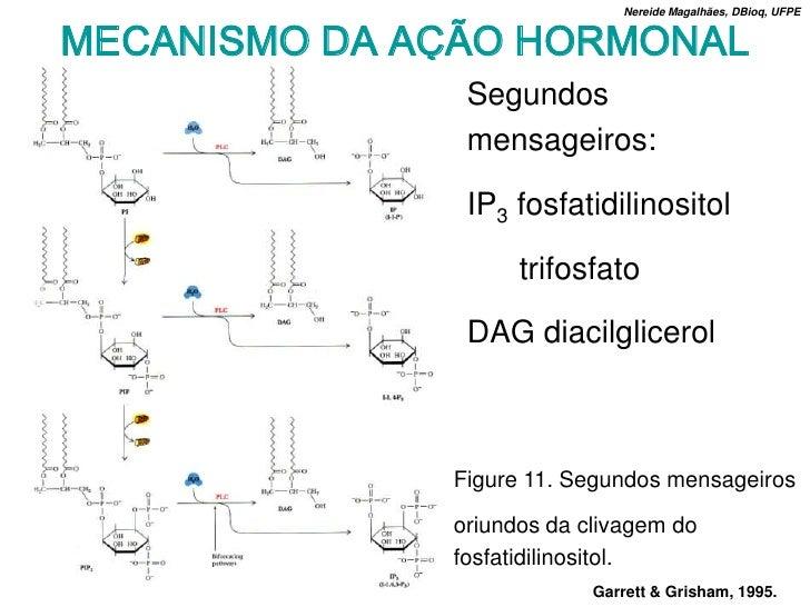 Nereide Magalhães, DBioq, UFPE   MECANISMO DA AÇÃO HORMONAL                Segundos                mensageiros:           ...