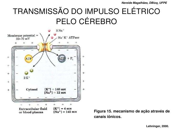 Nereide Magalhães, DBioq, UFPE   TRANSMISSÃO DO IMPULSO ELÉTRICO          PELO CÉREBRO                      Figura 15. mec...