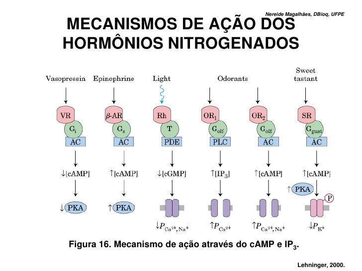 Nereide Magalhães, DBioq, UFPE  MECANISMOS DE AÇÃO DOS HORMÔNIOS NITROGENADOS     Figura 16. Mecanismo de ação através do ...