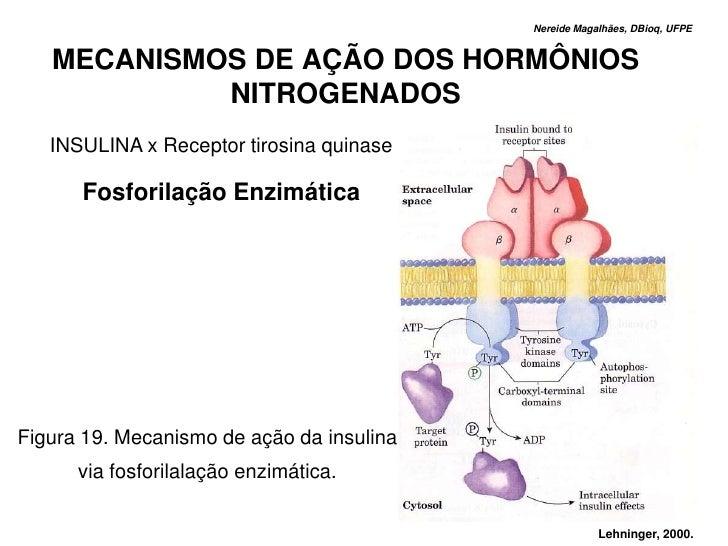 Nereide Magalhães, DBioq, UFPE      MECANISMOS DE AÇÃO DOS HORMÔNIOS             NITROGENADOS    INSULINA x Receptor tiros...