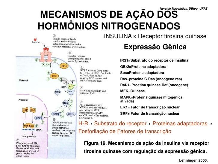 Nereide Magalhães, DBioq, UFPE  MECANISMOS DE AÇÃO DOS HORMÔNIOS NITROGENADOS                INSULINA x Receptor tirosina ...
