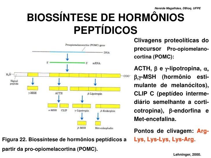 Nereide Magalhães, DBioq, UFPE             BIOSSÍNTESE DE HORMÔNIOS                  PEPTÍDICOS                           ...