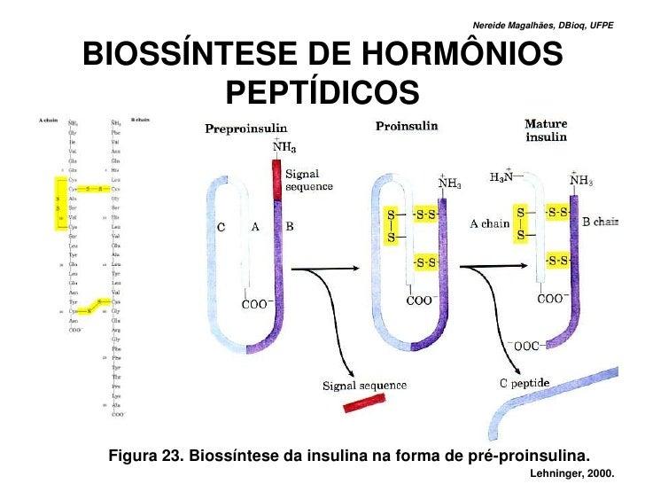 Nereide Magalhães, DBioq, UFPE    BIOSSÍNTESE DE HORMÔNIOS         PEPTÍDICOS      Figura 23. Biossíntese da insulina na f...