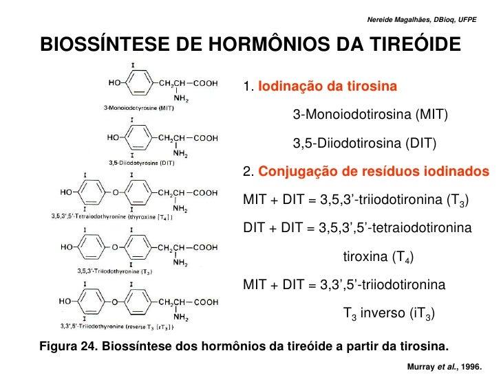 Nereide Magalhães, DBioq, UFPE    BIOSSÍNTESE DE HORMÔNIOS DA TIREÓIDE                                    1. Iodinação da ...