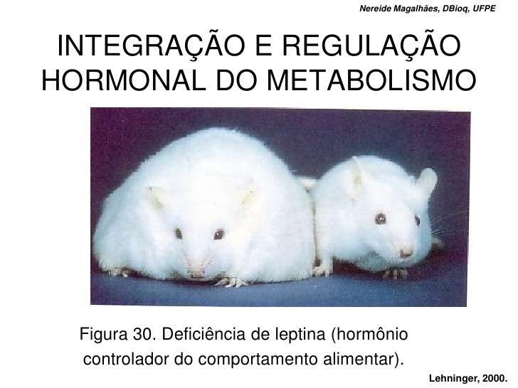 Nereide Magalhães, DBioq, UFPE      INTEGRAÇÃO E REGULAÇÃO HORMONAL DO METABOLISMO       Figura 30. Deficiência de leptina...