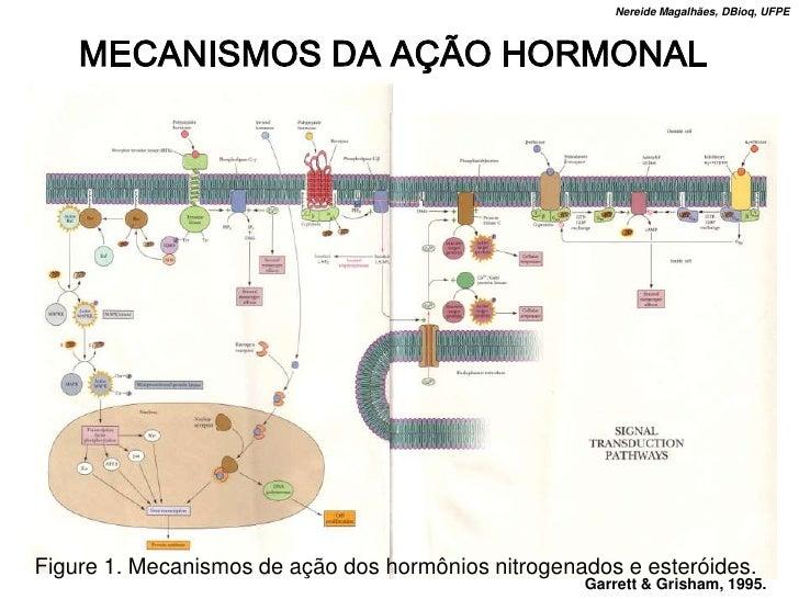 Nereide Magalhães, DBioq, UFPE        MECANISMOS DA AÇÃO HORMONAL     Figure 1. Mecanismos de ação dos hormônios nitrogena...