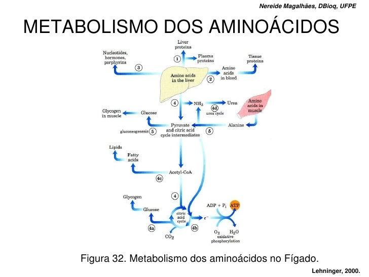 Nereide Magalhães, DBioq, UFPE   METABOLISMO DOS AMINOÁCIDOS         Figura 32. Metabolismo dos aminoácidos no Fígado.    ...
