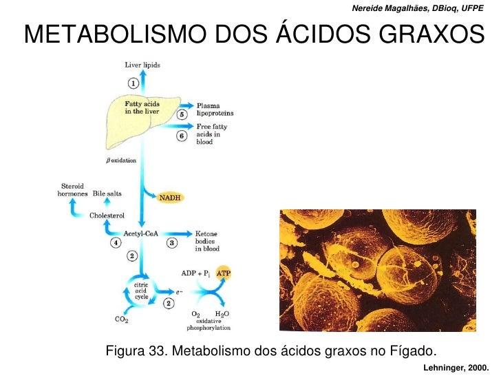 Nereide Magalhães, DBioq, UFPE   METABOLISMO DOS ÁCIDOS GRAXOS          Figura 33. Metabolismo dos ácidos graxos no Fígado...