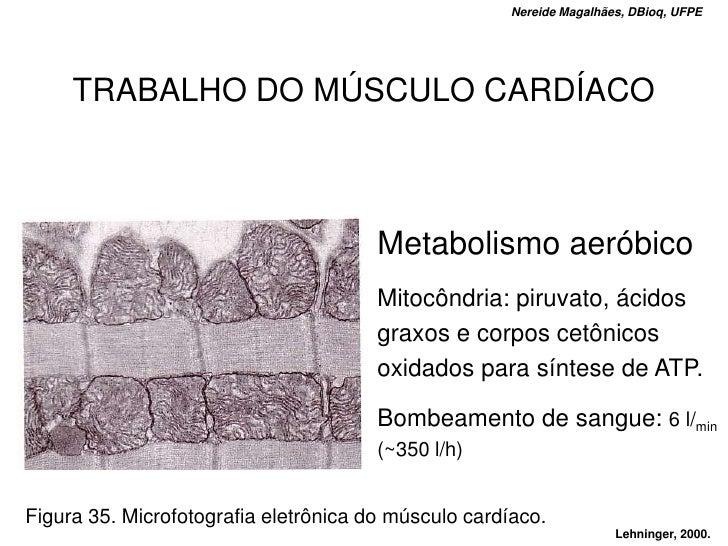 Nereide Magalhães, DBioq, UFPE          TRABALHO DO MÚSCULO CARDÍACO                                           Metabolismo...
