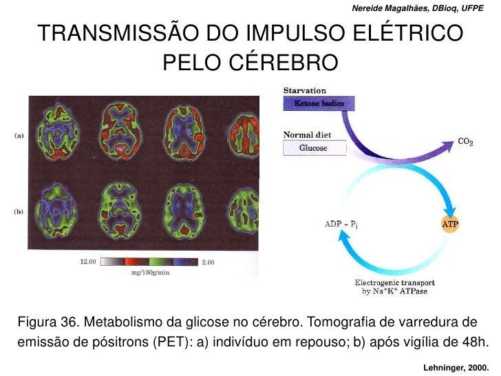 Nereide Magalhães, DBioq, UFPE      TRANSMISSÃO DO IMPULSO ELÉTRICO             PELO CÉREBRO     Figura 36. Metabolismo da...
