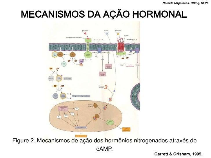 Nereide Magalhães, DBioq, UFPE       MECANISMOS DA AÇÃO HORMONAL     Figure 2. Mecanismos de ação dos hormônios nitrogenad...
