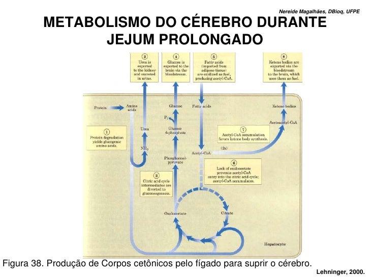 Nereide Magalhães, DBioq, UFPE           METABOLISMO DO CÉREBRO DURANTE                JEJUM PROLONGADO     Figura 38. Pro...