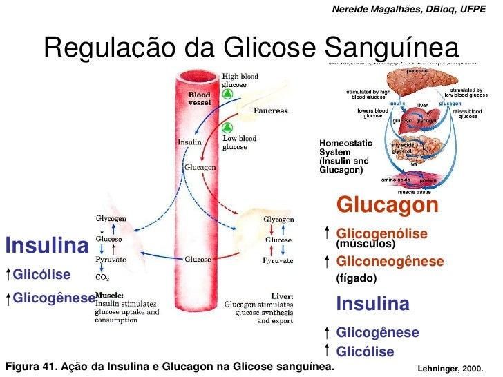 Nereide Magalhães, DBioq, UFPE          Regulação da Glicose Sanguínea                                                    ...