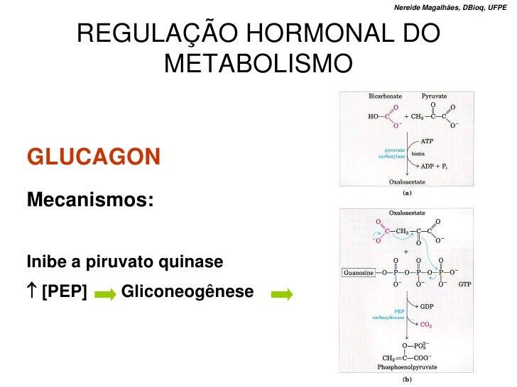 Nereide Magalhães, DBioq, UFPE          REGULAÇÃO HORMONAL DO            METABOLISMO   GLUCAGON Mecanismos:   Inibe a piru...