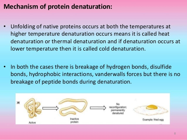 7 8 mechanism of protein denaturation