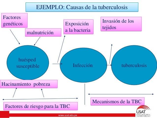 Datos b sicos sobre la tuberculosis