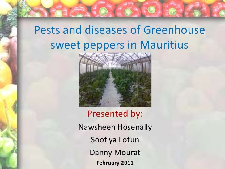 Pests and diseases of Greenhouse   sweet peppers in Mauritius          Presented by:        Nawsheen Hosenally          So...