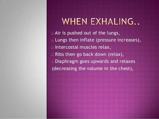  Air is pushed out of the lungs, Lungs then inflate (pressure increases), Intercostal muscles relax, Ribs then go back...