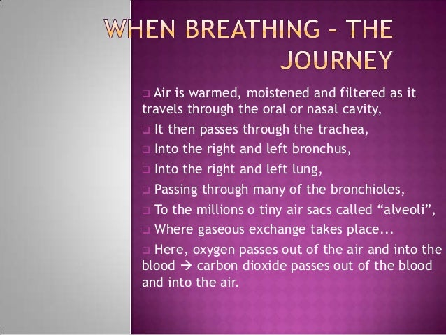  Air is warmed, moistened and filtered as ittravels through the oral or nasal cavity, It then passes through the trachea...