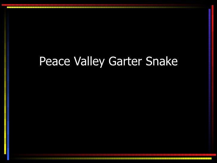 Peace Valley Garter Snake