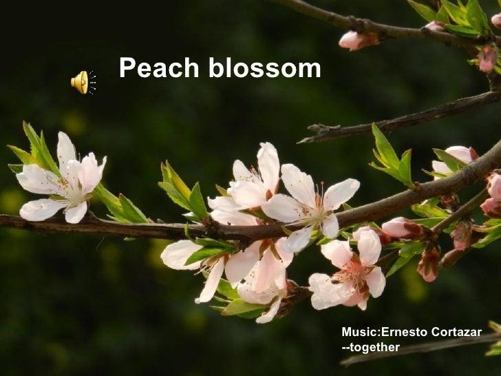 Peach blossom                Music:Ernesto Cortazar                --together