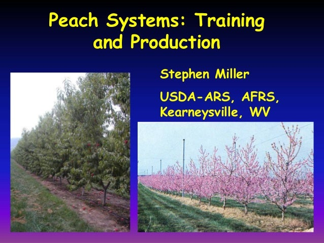 Peach Systems: Training and Production Stephen Miller USDA-ARS, AFRS, Kearneysville, WV