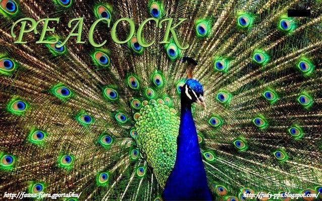 http://fauna-flora.gportal.hu/ http://judy-pps.blogspot.com/