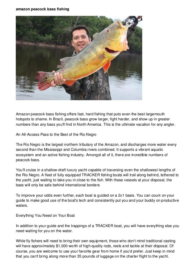 amazon peacock bass fishing  Amazon peacock bass fishing offers fast, hard fishing that puts even the best largemouth  hot...