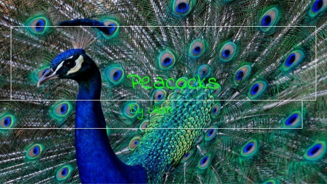 Peacocks By Lillian