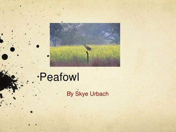 Peafowl<br />By Skye Urbach<br />